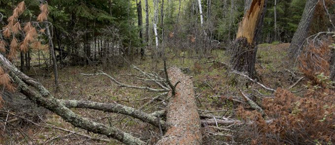 A tree falling in the forest. Does anyone hear it?