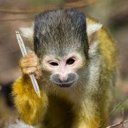 monkey holding cross pen
