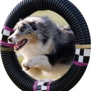 a dog jumping through a hoop